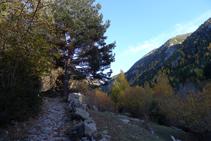 El camí és preciós.