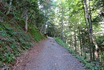 Avancem un tram per dintre del bosc. Avets, fajos, bedolls... ens aporten una frescor reconfortant si fem la ruta en ple estiu.