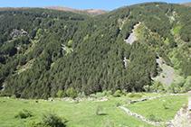 A l´altra banda, part obaga de la vall amb un bosc dens de pins i d´altres espècies caducifòlies.