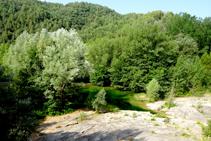 El bosc de ribera a Sant Quirze de Pedret.