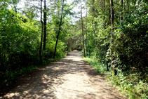 A l´ombra del bosc.