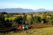 Les fèrtils terres del volcà de la Crosa.