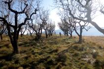Vista panoràmica de les feixes del Roc de Pessonada.