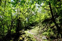 Part baixa del bosc d´Arnui.