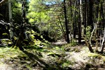 Jocs de llums i ombres al bosc d´Arnui.
