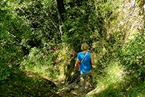 El camí que baixa des de l´ermita de Sant Corneli, frondós i ben fressat.