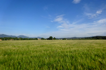 Camps de blat de Can Salamanya.