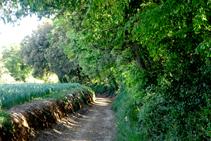 Bosquet de Can Coll abans d´arribar a Sant Dalmai.